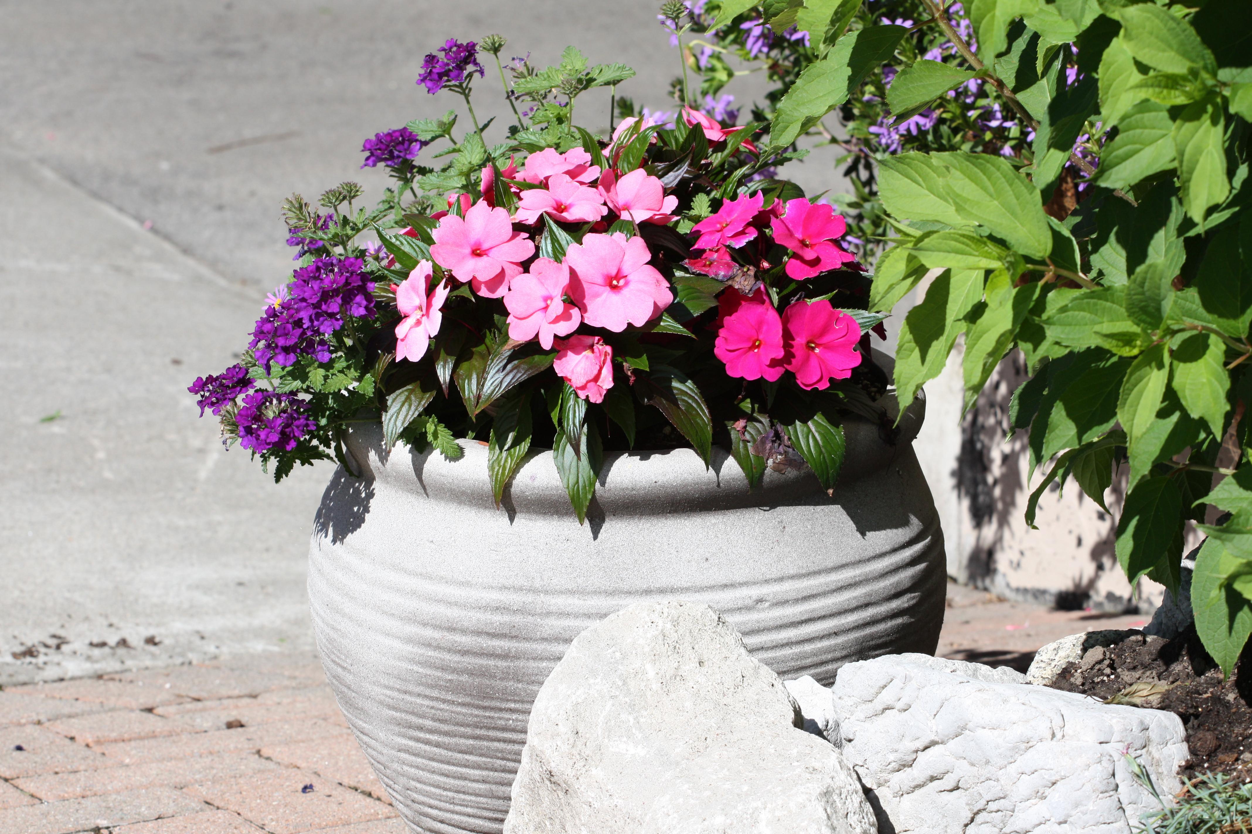 Kwiaty W Donicach Ogrod Dla Ciebie