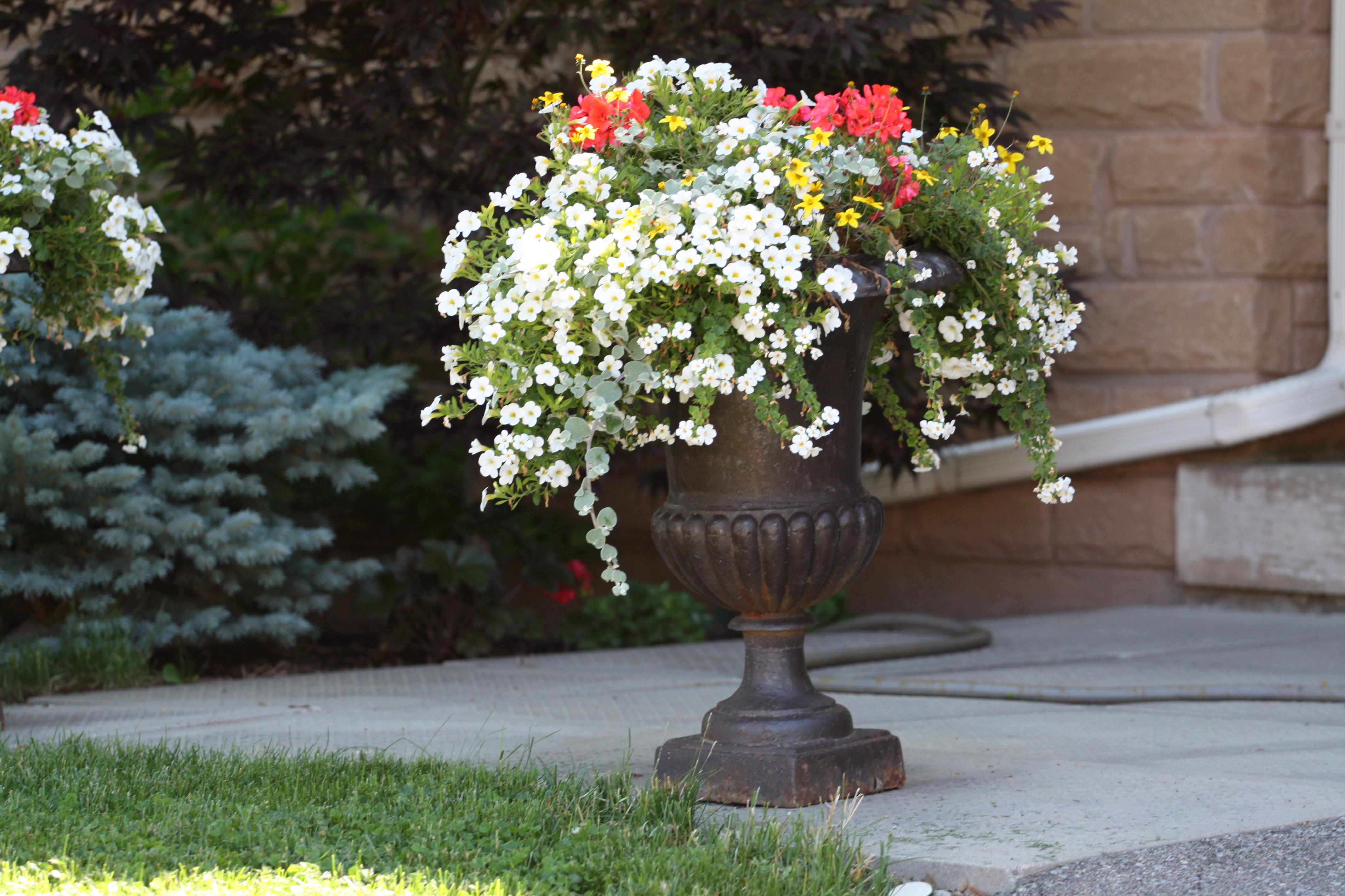 Kwiaty W Donicach Ogród Dla Ciebie