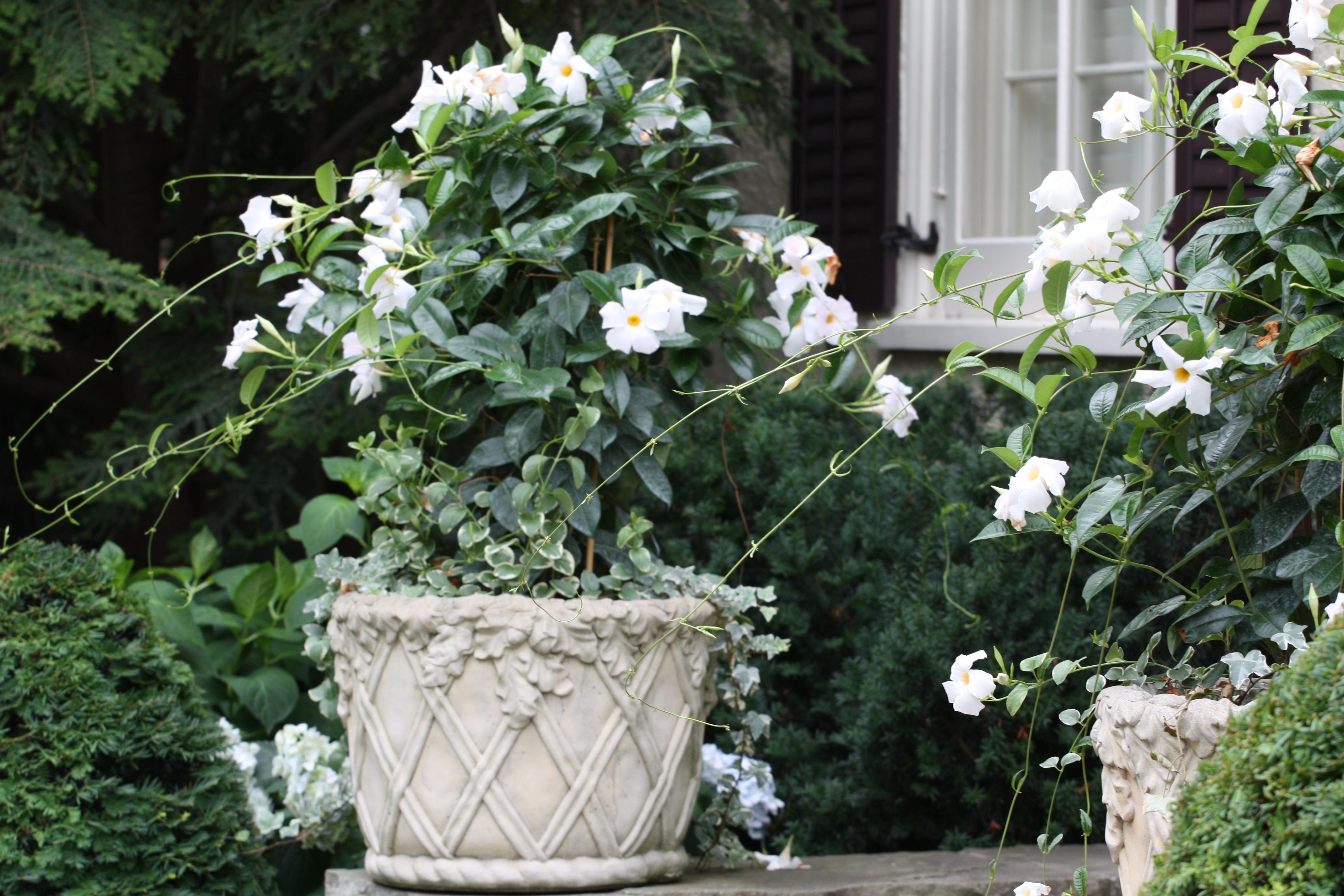 Kwiaty Ogród Dla Ciebie