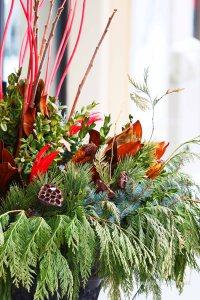zieleń w donicy, zimowa aranżacja do ogrodu