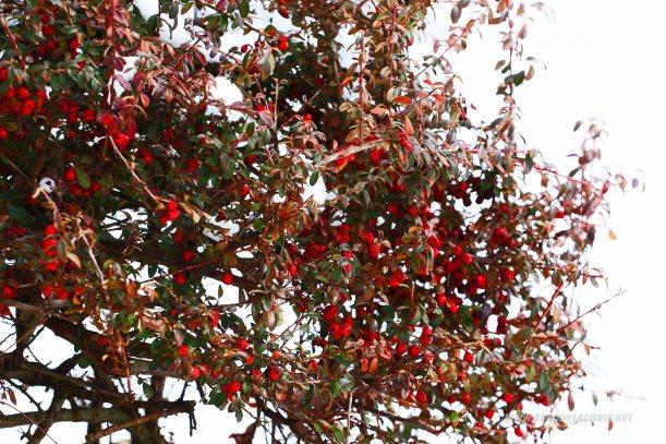 krzew w zimowym ogrodzie