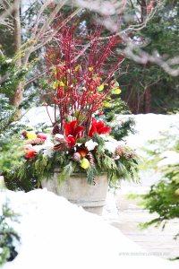 aranzacja z zieleni w zimowym ogrodzie