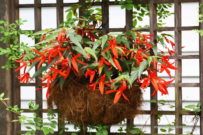 kwiatowe dekoracje do ogrodu