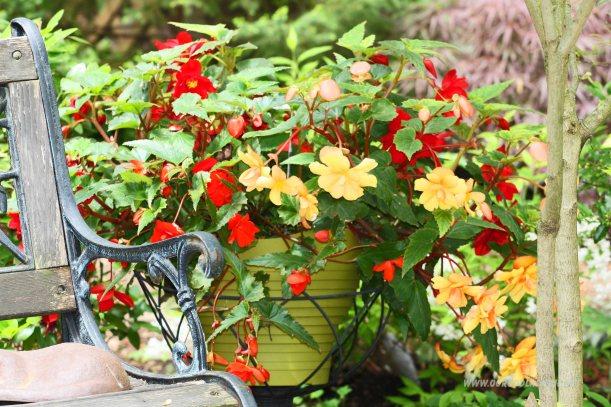 kwiaty w donicy- dekoracja do ogrodu