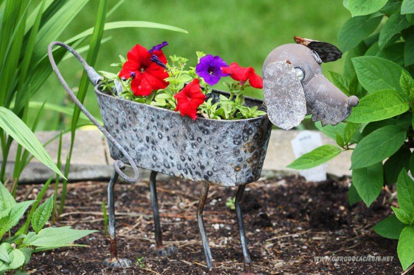 pies - kwiatowa dekoracja do ogrodu