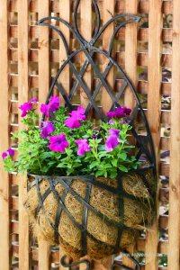 petunia w donicy, dekoracja do ogrodu