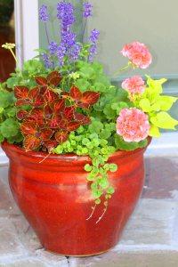 kwiaty w pomarańczowej donicy