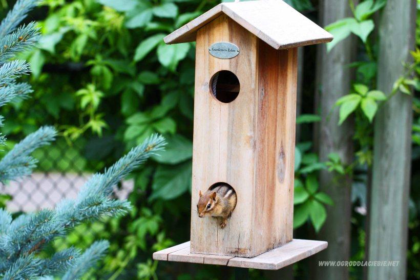 karmnik dla ptaków i nietylko